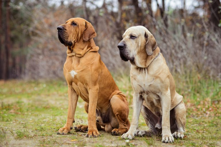 Top 10 Most Deadliest Dog Breeds in the World (No 3 can kill humans in few seconds)