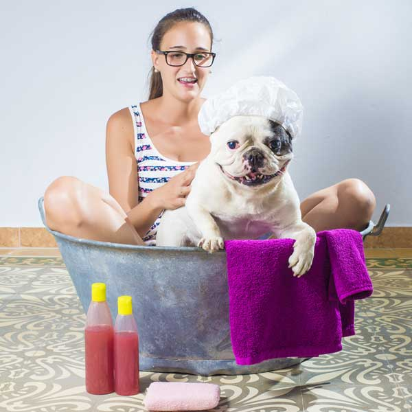 Diy dog care how to give your dog an at home spa day solutioingenieria Gallery