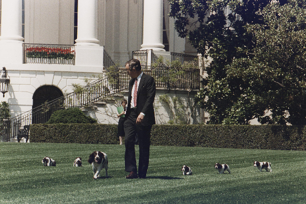 President George H.W. Bush (41) walks on the South Lawn of the White House, followed by Millie and her puppies in 1989.