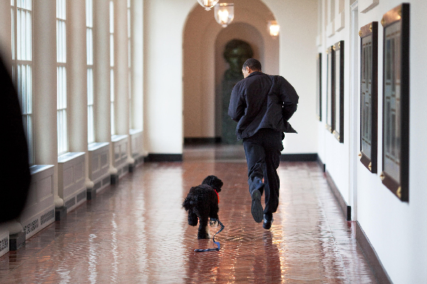 "President Barack Obama runs down the East Colonnade with family dog ""Bo."""