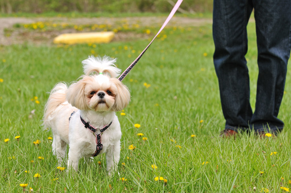 A small dog on a leash.