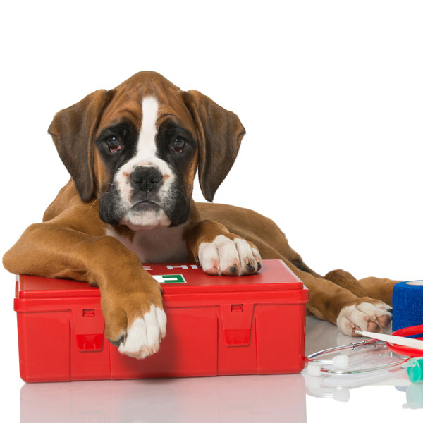A puppy with a first aid kit.