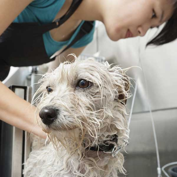 Dog grooming dogster our best tips for diy dog grooming solutioingenieria Choice Image