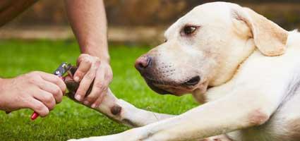 Tips From A Groomer How To Trim Your Dog S Nails At Home