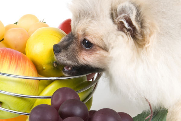 What Exotic Fruits Can Dogs Eat?