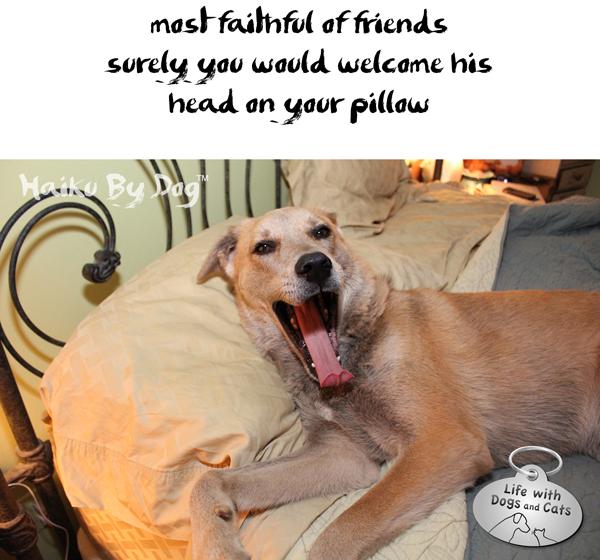 Haiku-by-Dog-Jasper-faithful-friend-pillow