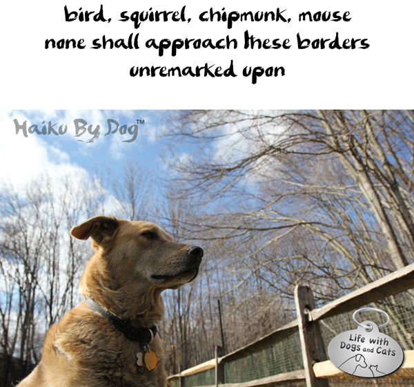 Haiku-by-Dog-Jasper-none-approach-borders