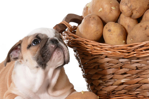 Can Dogs Eat Potatoes Safely What About Sweet Potatoes