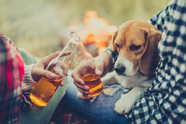 Beagle and people cheersing or toasting with beers.