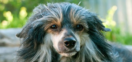 Image Result For Dog Food That Causes