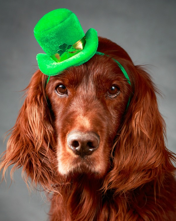 facca0e8d The Top 10 St. Patrick's Day Dog Names