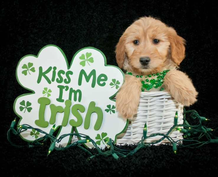 The Top 10 St. Patrick's Day Dog Names