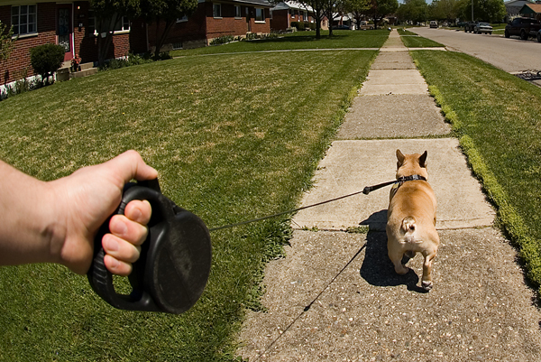 5 Reasons Why I Love My Retractable Leash