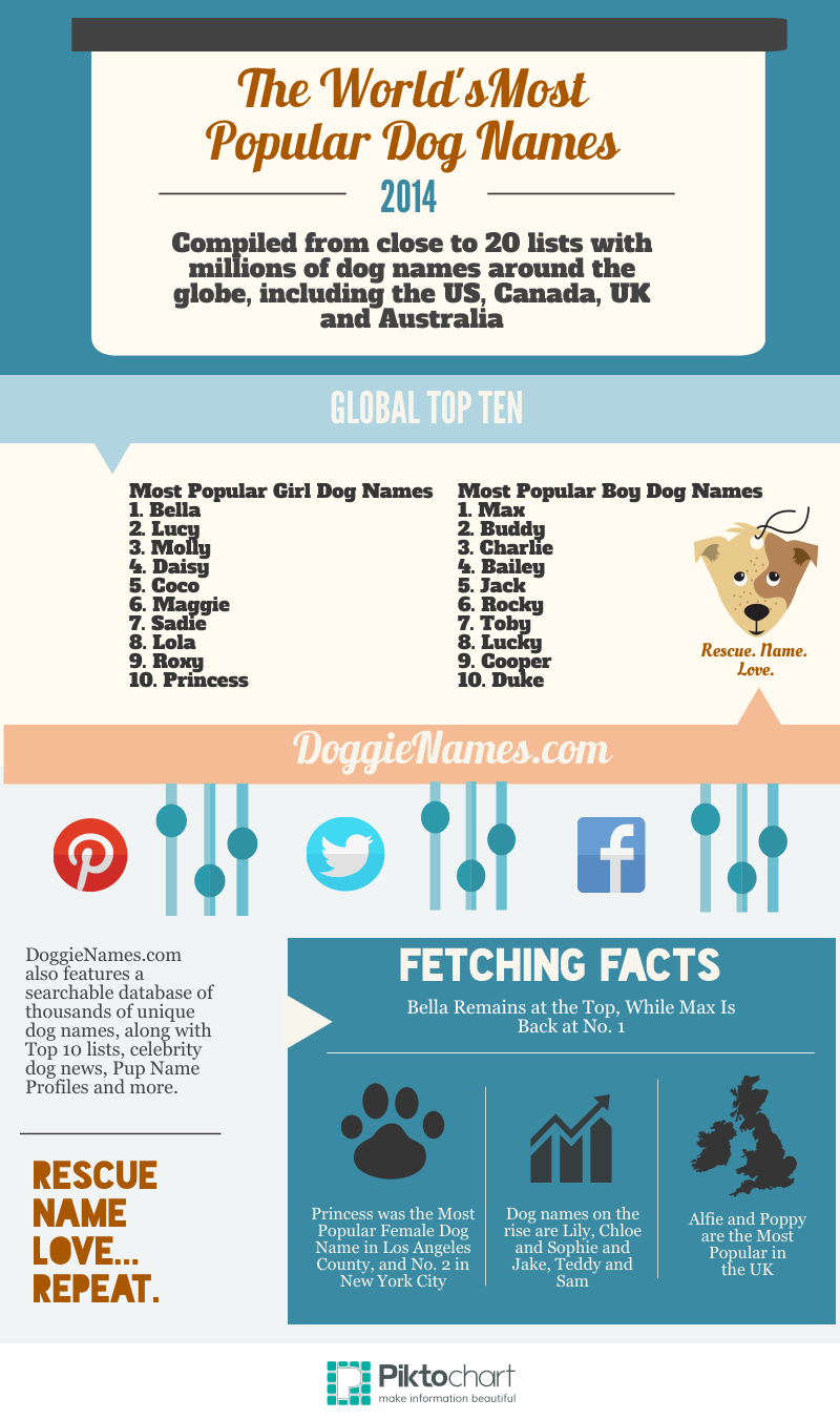 What Are the Most Popular Dog Names on Dogster?