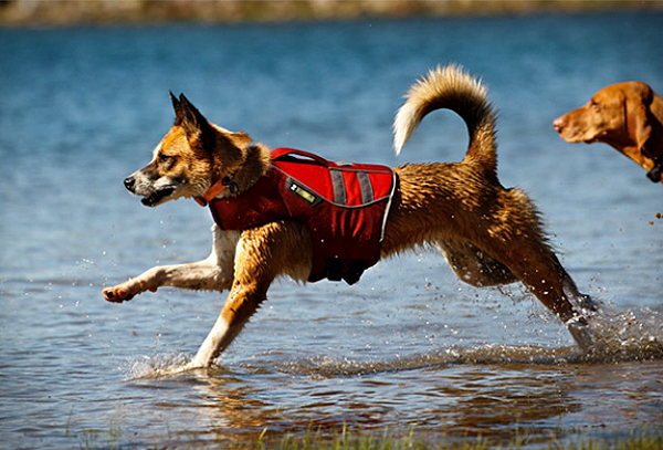 10 Gifts for Dog Lovers Who Also Love the Outdoors