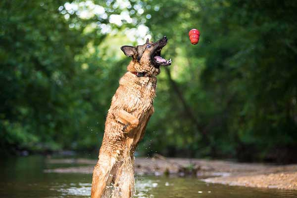 10 Reasons to Love Lucca the 3-Legged Marine Hero Dog