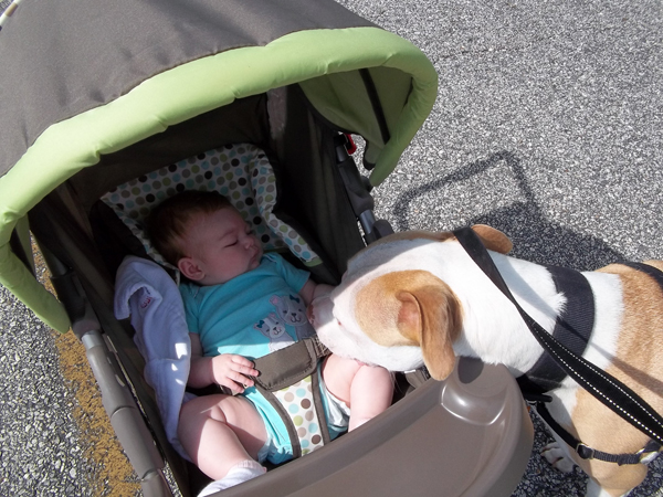 Would You Ever Give Up Your Dog Because of Your Baby?