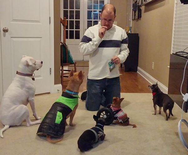 """Birdee, the """"Chicken Wing Chi,"""" Helps Other Special-Needs Dogs"""