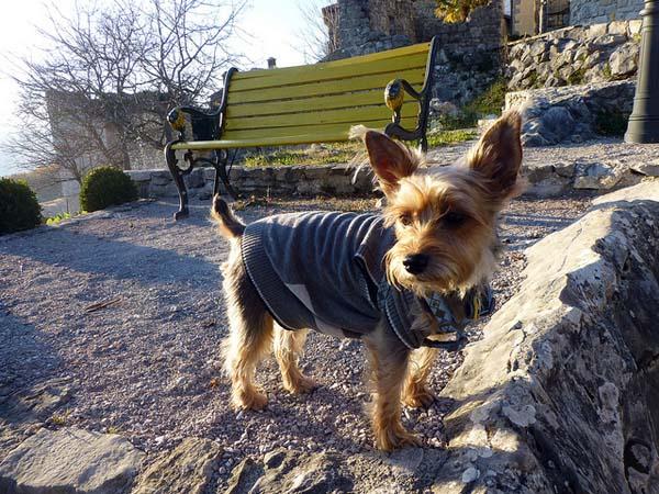 Luna, my emotional support dog, explores Croatia. (All photos courtesy Gigi Griffis)