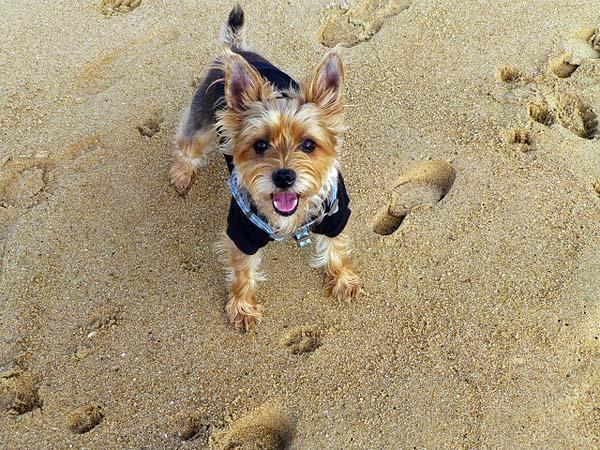 Luna on a French beach.