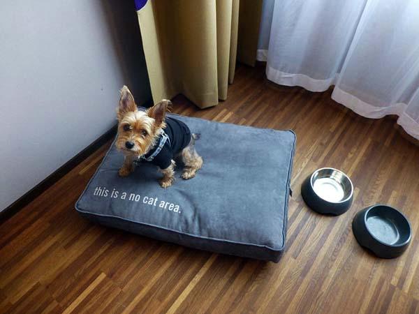 Luna enjoying the hospitality of 25 Hours Hotel in Zurich, Switzerland.