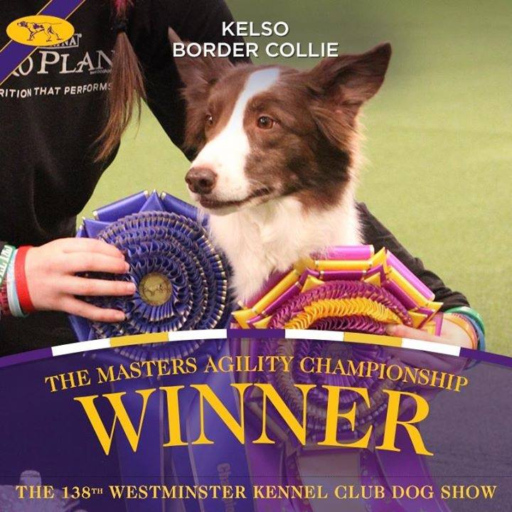 Rugby Dog Agility Show: What It's Like To Attend The Westminster Dog Show's