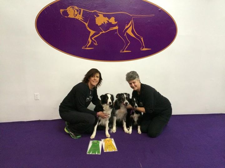 What It's Like to Attend the Westminster Dog Show's Agility Competition