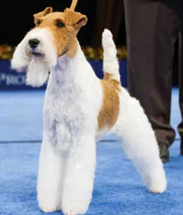 My 10 Predictions for the National Dog Show