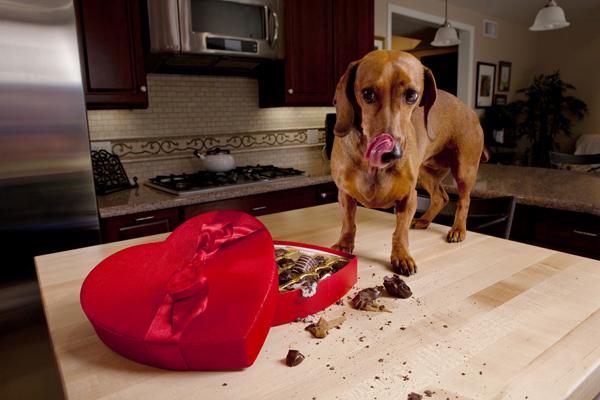 Dog Ate Hot Fudge
