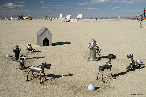 The 7 Types of Dogs You'd See at Burning Man