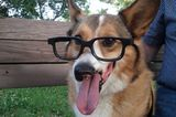 The 5 Best Dogster Monday Miracles of 2013