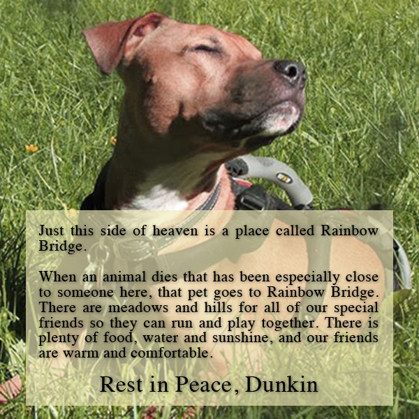 Today We Mourn the Death of Dunkin and Celebrate His Life and Legacy