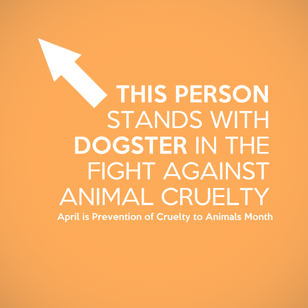 "Let's ""Go Orange"" and Help Prevent Animal Cruelty"