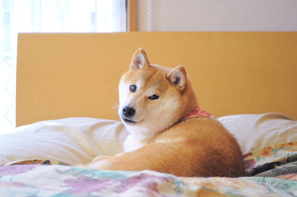 Wow! Such Luck! The Story of Doge, the Internet's Latest Craze
