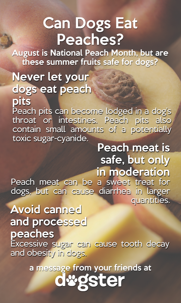 Can Dogs Eat Peaches?