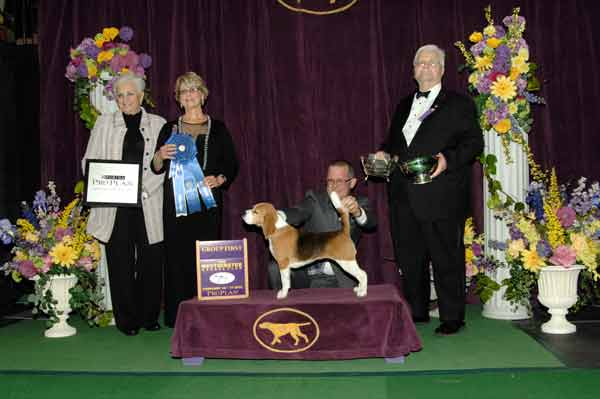 We Were Right! Miss P, Flame, and Swagger Win at Westminster