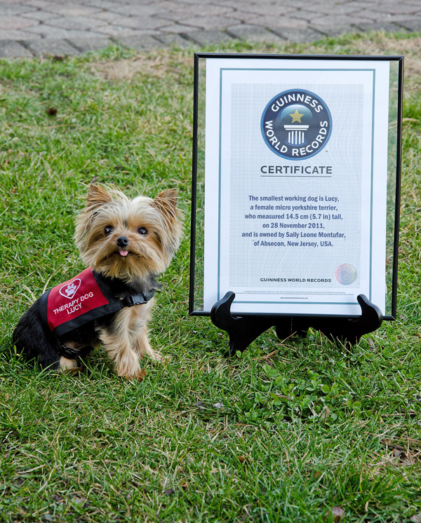 lucy the worlds smallest working dog is a rescue sucess
