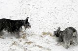 Let's Talk: Do Your Dogs Like Cold Weather?