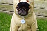 Get Your Pup in Our Halloween Dog Costume Photo Contest