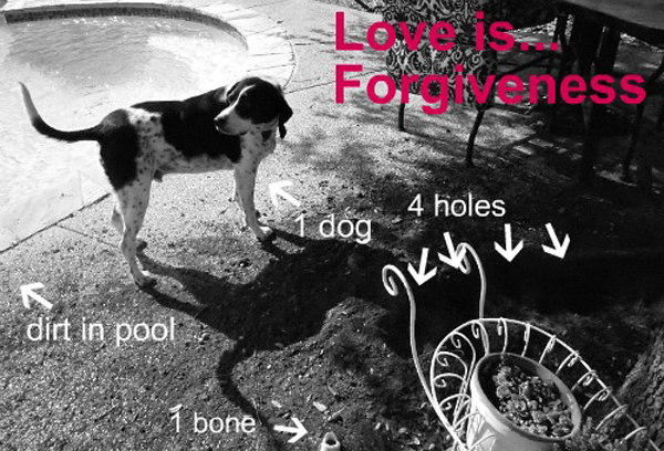 Dogster Quiz: What Your Dog Is Getting You This Valentine's Day