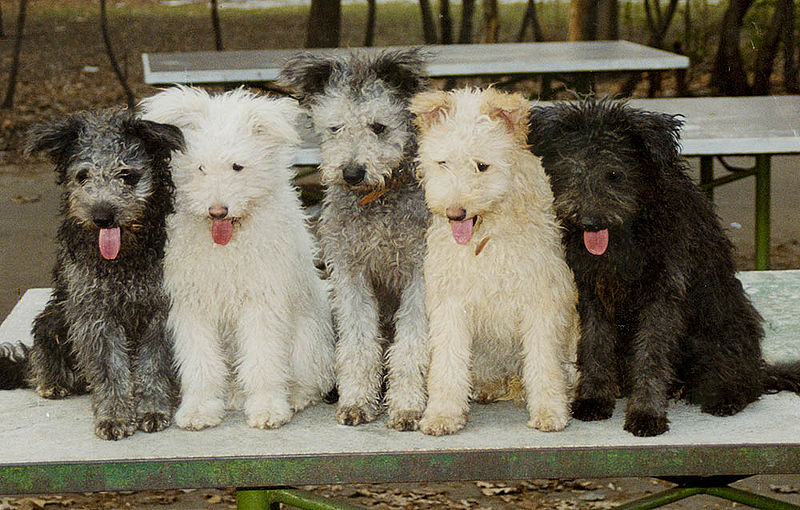 We Ask a Breed Nerd: 10 Dogs for Benedict Cumberbatch