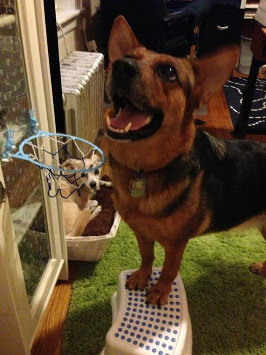 Dog Trick Training: The Benefits Go Way Beyond Wowing People