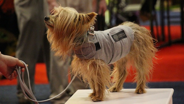 Win an American Kennel Club Calming Coat from BH Pet Gear