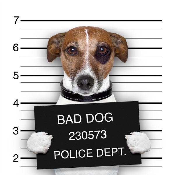 dogs misbehaving is one of the many reasons why proper pet sitter insurance is crucial