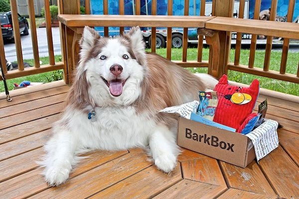 7 Dog Subscription Boxes: The Perfect Last-Minute Holiday Gift!