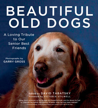 "Win a Copy of My Book and See Photos of ""Beautiful Old Dogs"""
