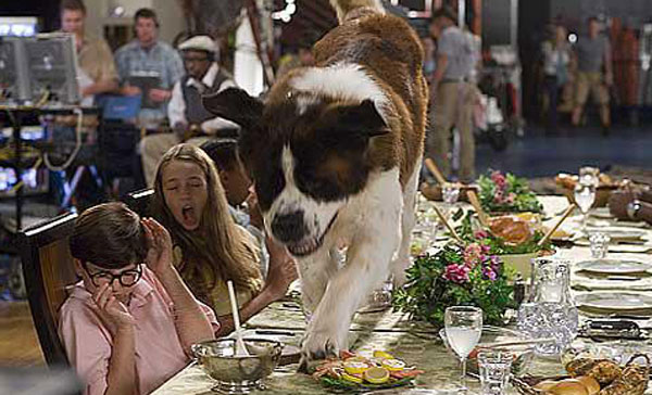 just how safe are dog actors while filming hollywood movies