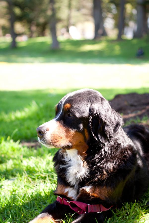 Meet Bentley, the Painted Pup of San Francisco