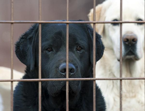 Is Black Dog Syndrome Real? Yes. No. Kinda-Sorta