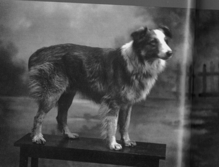 the history of dog Brewdog history our beery journey so far home about history  in 2017 we celebrated the decade of dog ten years since brewdog came howling into the world.